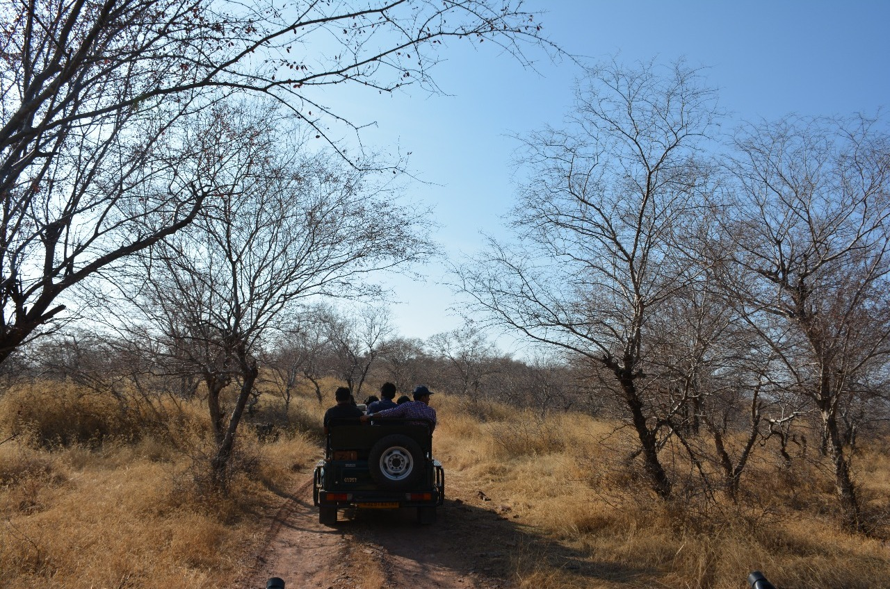 4.1485624960.jungle-safari