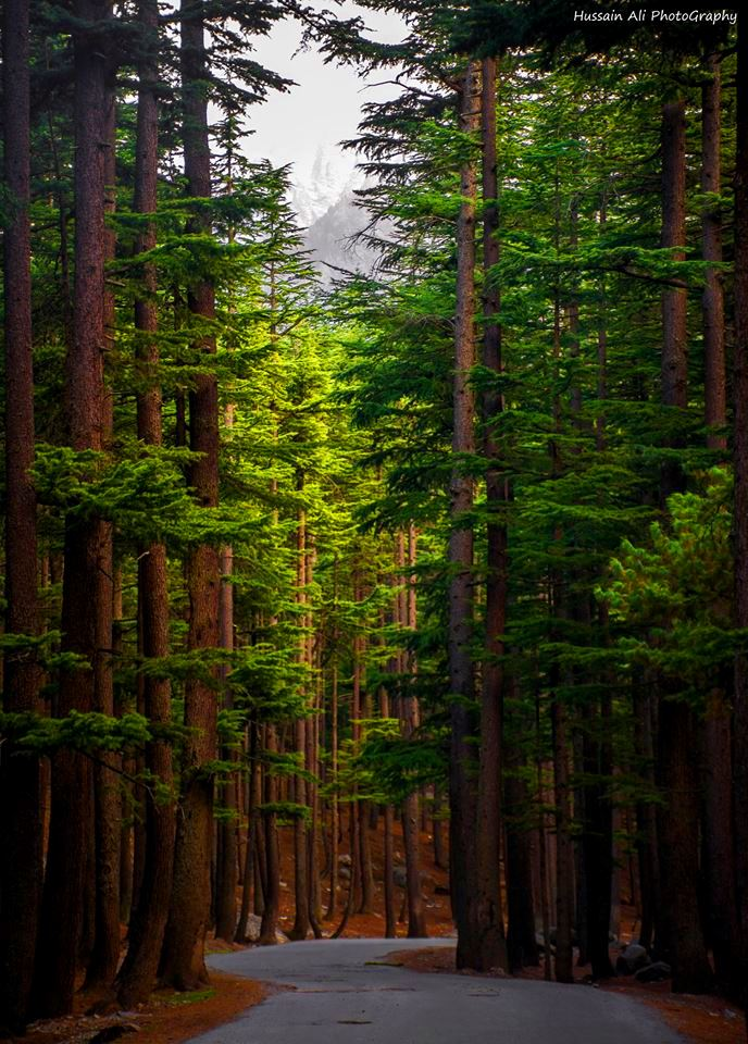 kalam forest