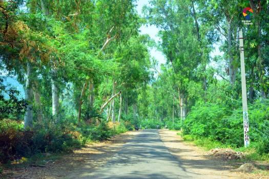 Road to Siliserh Lake